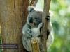Billabong Koala Breeding Centre, Port Macquarie