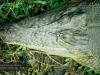 Freshie, David Fleay Wildlife Park, Coolangatta