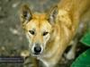 David Fleay Wildlife Park, Coolangatta