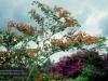 Brisbane, Botanischer Garten