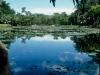 Flecker Botanic Gardens, Cairns