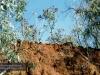 Auf dem Weg von Cairns zur Mossman Gorge