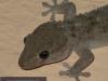 138_gecko2
